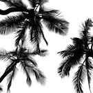 Palms by Ray4cam
