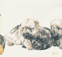 Cairn Terrier Puppies by BarbBarcikKeith