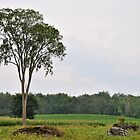 Just One Tree (1) by goddarb