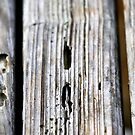 Old Wood Texture by Henrik Lehnerer