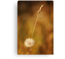 Fields of Gold 1 Canvas Print