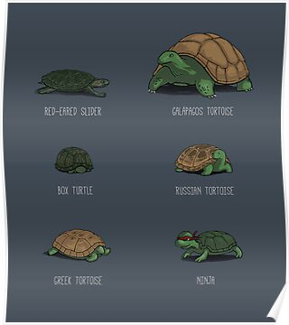 Know Your Turtles by Justyna Dorsz