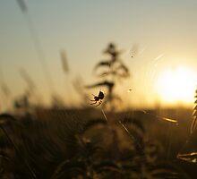 Webs at sundown by SNDynasty
