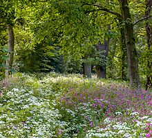 Woodland Flowers by Paul Richards