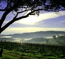 South Australia Barossa Landscape by jwwallace