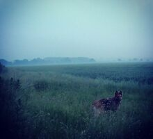 Fox in the Fog by kirsten-designs