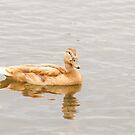 Yellow mallard duck by Arve Bettum