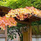 Japanese Maple Tree Fall Foliage by davidgnsx1