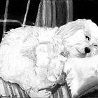Cockapoo Dog Portrait  by Oldetimemercan