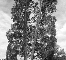 Leaning Trees by bracethedark