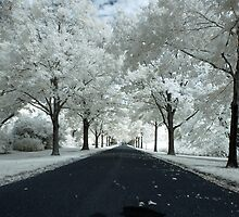 Maple Avenue in Color Infrared by StevesPhotos