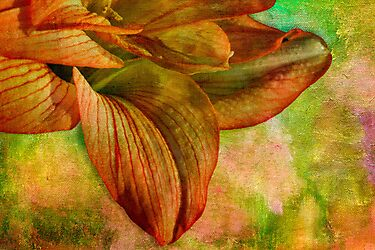 Sunny amaryllis on canvas by Celeste Mookherjee