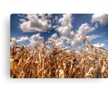 Dead Corn Under a Cloudy Sky Metal Print