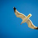 Seagull by Apostolos Mantzouranis