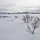 mývatn, iceland by gary roberts
