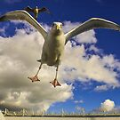 Angry Seagull by James Taylor