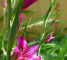 Gladiolas In Blur by WildestArt