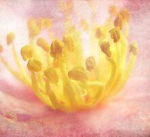 Aura of Light by Susan Werby