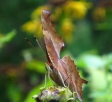 Rawhide Butterfly by MarianBendeth