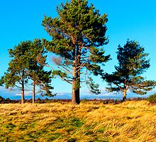 Stand Tall Brothers - Culloden Moors by Mark Tisdale