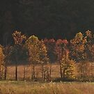 reflection of fall by dc witmer