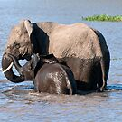 Mother with calf by Vickie Burt