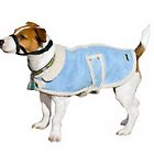 Jack Russell Terrier by Gracey