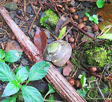 Jungle Shell by Nicole Schmidt