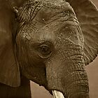 Elephant Youth by pratt1ak