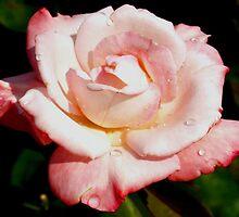 Dewy pink rose by ?? B. Randi Bailey