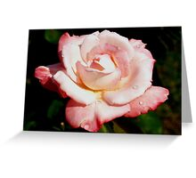 Dewy pink rose Greeting Card