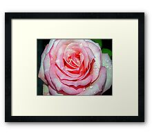 Drops on a pink beauty Framed Print