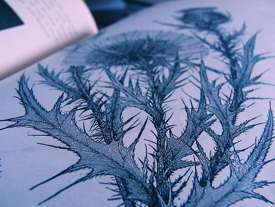 Book of Flowers by RosPho