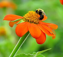 Flower and Bee by Alberto  DeJesus