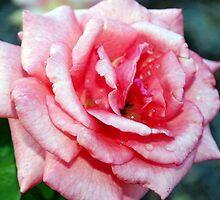 Sprinkles on pink by ?? B. Randi Bailey