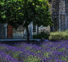 Vincents garden by Jo-PinX