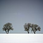 Winter Trees Skyline 3 by eatsleepdesign