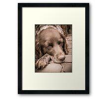 Shishka-Dog Sleeps Framed Print