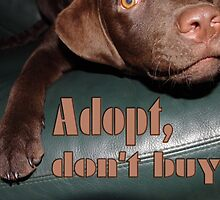 Adopt don't buy by fuxart