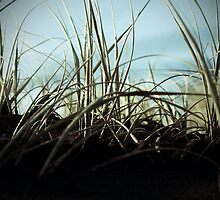 Bethells beach dune grass, Auckland, New Zealand by SDStinchcombe