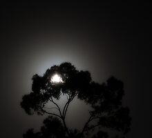 Arboreal Moonrise by Duncan Waldron