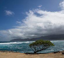 Wild Coast - Laie Point, North Shore, Hawaii by Georgia Mizuleva