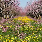 Blossom Heaven by Marilyn Cornwell