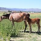 Mommy and baby in the wild, Reno Nevada USA by Anthony & Nancy  Leake
