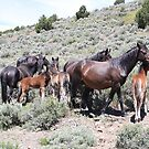Wild Horse Family Reno Nevada USA by Anthony & Nancy  Leake