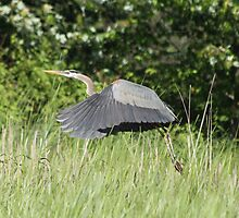 Harold the heron to the rescue by Heather King