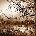 Black and White Tree By Pond nature photography by jemvistaprint