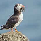 Puffin with sandeels by Margaret S Sweeny