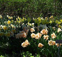Sea of Daffodils by MarianBendeth