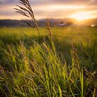 Meadow Light by Chad Dutson